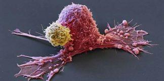 alimente-care-te-scapa-de-cancer